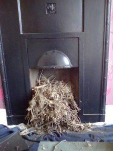 Removal of a birds nest.